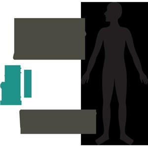 Бактерии микрофлоры кишечника сосуществуют с хозяином