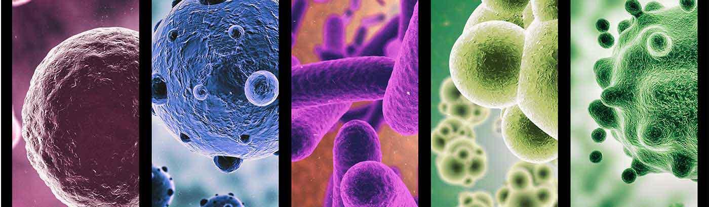 Роль микрофлоры кишечника