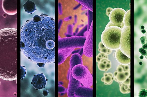 роль кишечной микрофлоры