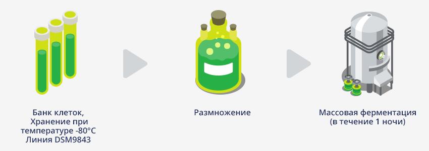 Производство препарата смектафлора комфорт: первый этап